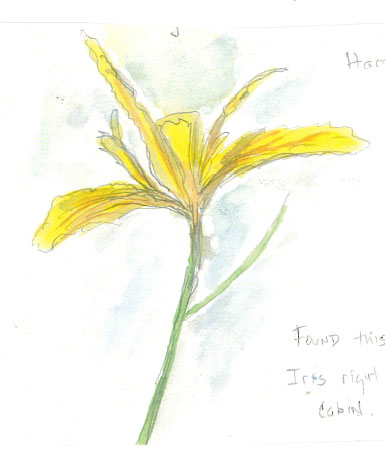 Nature Journaling In Pinecrest - Hartwegs Iris
