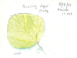Quaking Aspen Leaf, Pinecrest