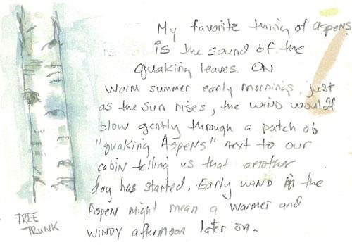 Aspen Trunk, Pinecrest